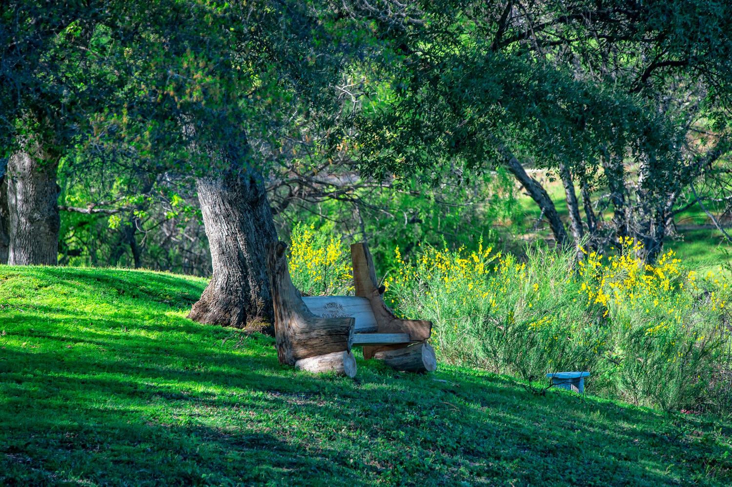 VIDEO BENCH BY POND PEGGY