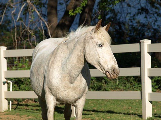 Beautiful Bess in pasture