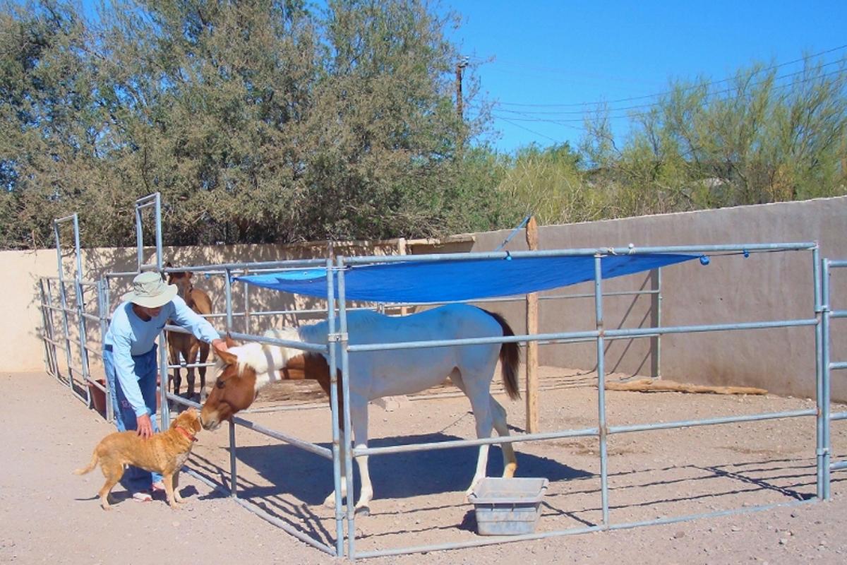 Deli under tarp was taken at the dog rescue compound In Loreto, Mexico