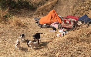 The puppies and their mom Shepp - living in a campsite along the American River.