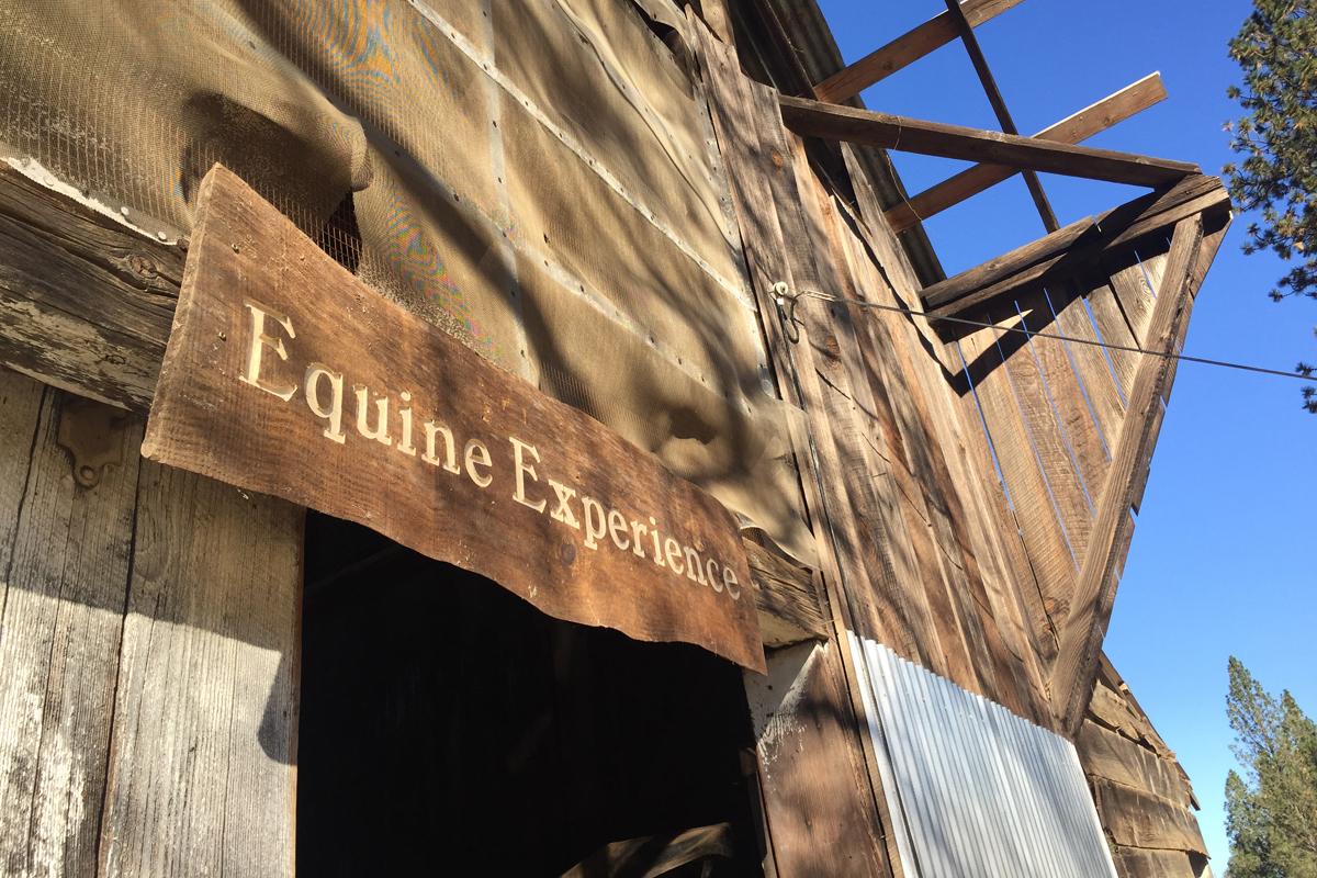 equine_experience